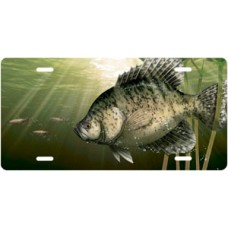 Crappie Offset License Plate