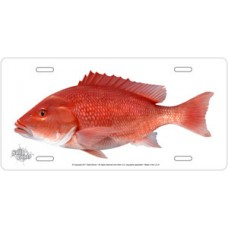 Red Snapper on White License Plate