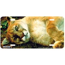 The Good Life- Sleeping Lion Airbrushed License Plate