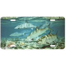 Bonefish and Conch Fish Airbrushed License Plate