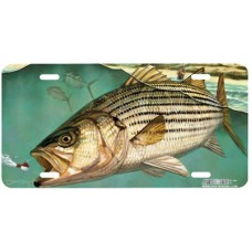 Striper Fish Airbrushed License Plate