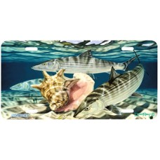 Bones and Conch Fish & Shells Airbrushed License Plate